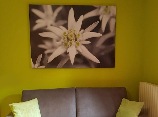 Tele Canvas